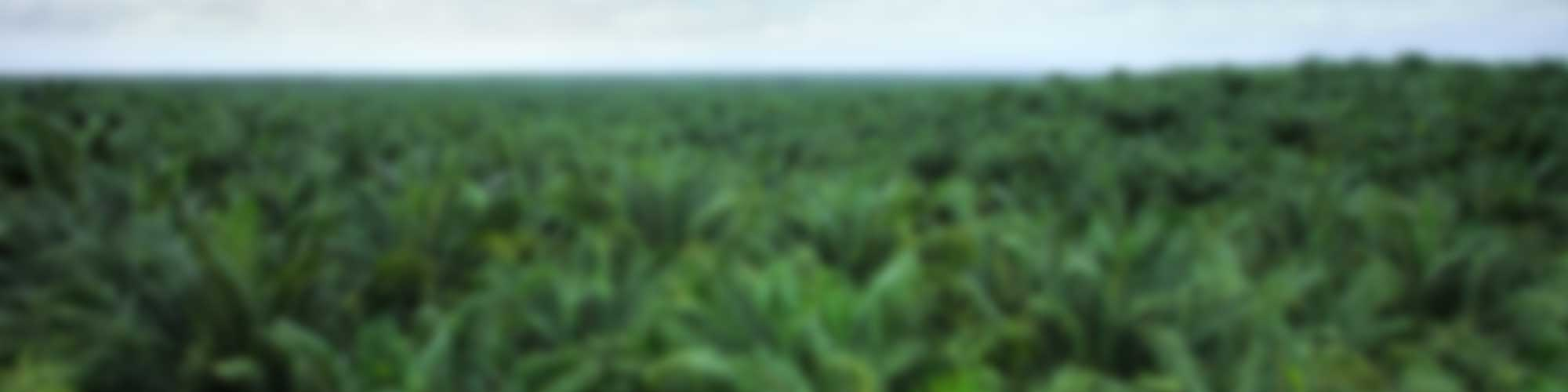 Is the Indonesian Palm Oil Industry Turning the Corner?