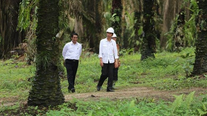President Jokowi Calls for Discrimination Against Palm Oil to End