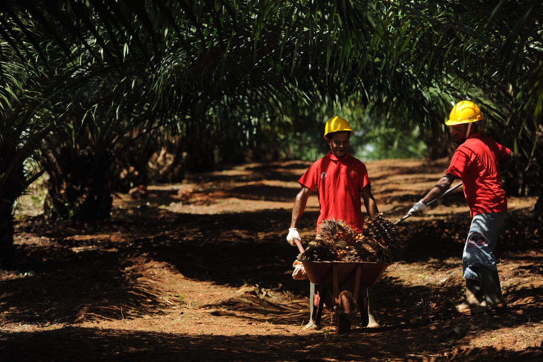 Pengamat: Pernyataan LSM soal Pelepasan Kawasan Hutan Membingungkan